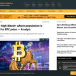 Bitcoin whale population is bullish for BTC price