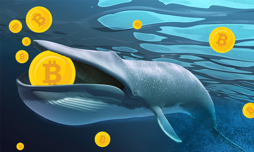 Bitcoin Whales are Buying More BTC Amid the Recent Dip: Santiment