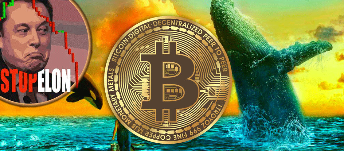 Bitcoin Whales Keep Buying More BTC Despite Elon Musk's Comments