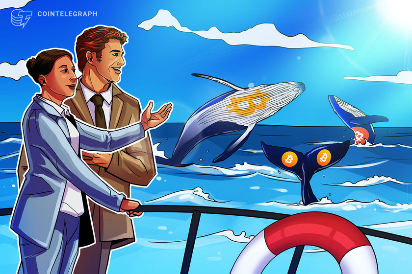 Bitcoin whales join 'small fish' in buying BTC as price holds above $47K